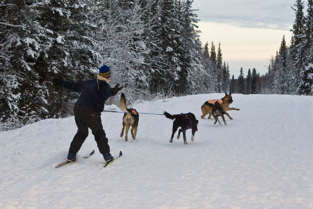 Pack of sled dogs pulling Arna on skis